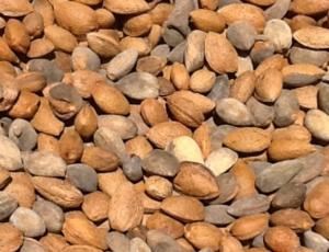 Almonds-low-res