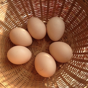 Eggs in a Basket.lowres